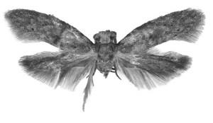 Wockia_chewbacca_holotype
