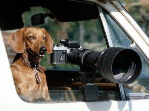 Canine-Camera_CalpD_r