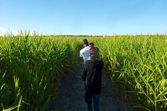 Breckenridge Corn Maze