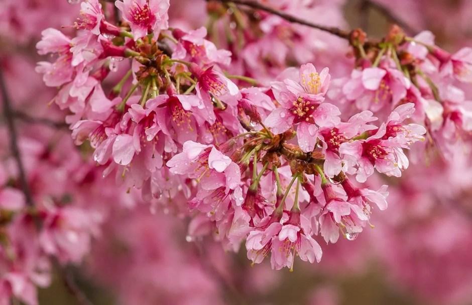 Spring Dorchester