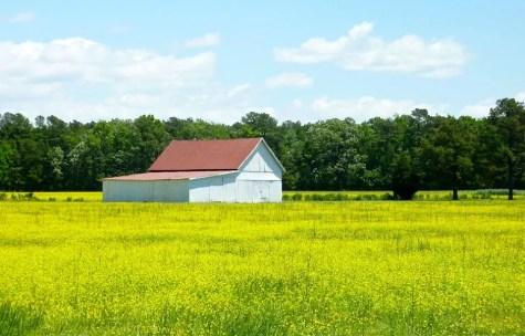 Dorchester Spring Farm