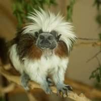 monkey at david traylor zoo in emporia