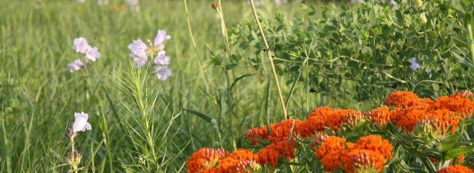 Wild flowers and grasses at flint hills wildlife refuge