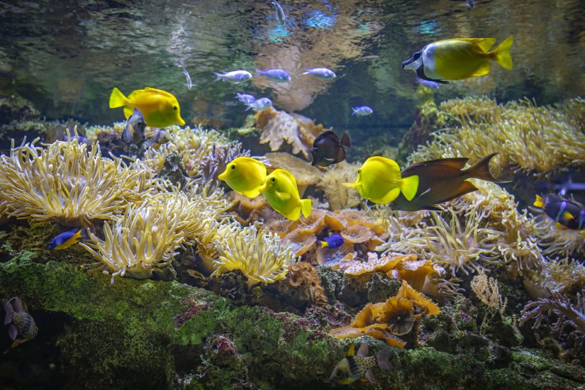 aquarium de limoges