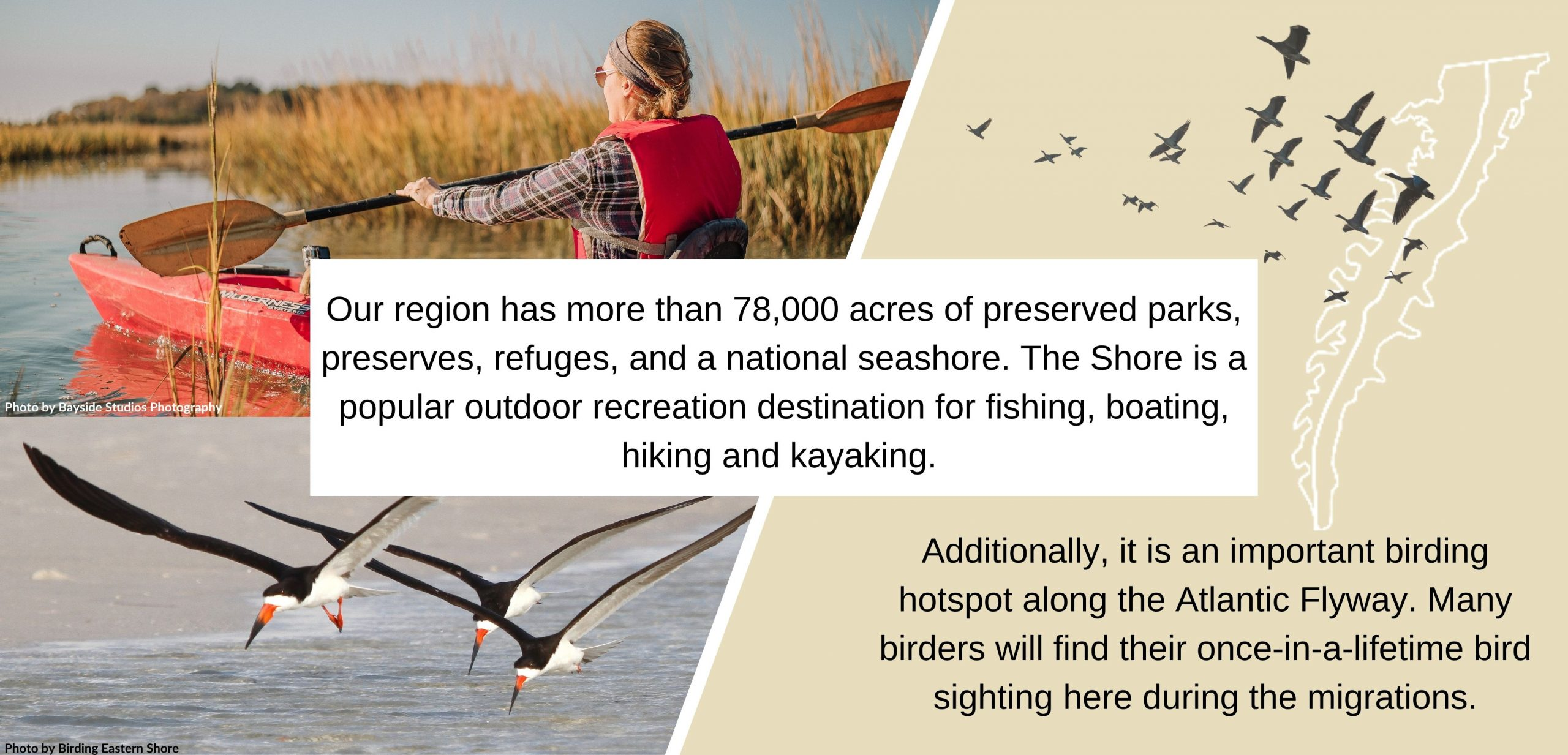 Our region has more than 78,000 acres of preserved parks, preserves, refuges, and a national seashore. The Shore is a popular outdoor recreation destination for fishing, boating, hiking and kayaking. Additionally, it is an important birding hotspot along the Atlantic Flyway. Many birders will find their once-in-a-lifetime bird sighting here during the migrations.