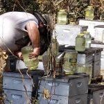 Beekeeper update