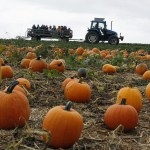 Agritourism businesses hopeful for bump in attendance this fall