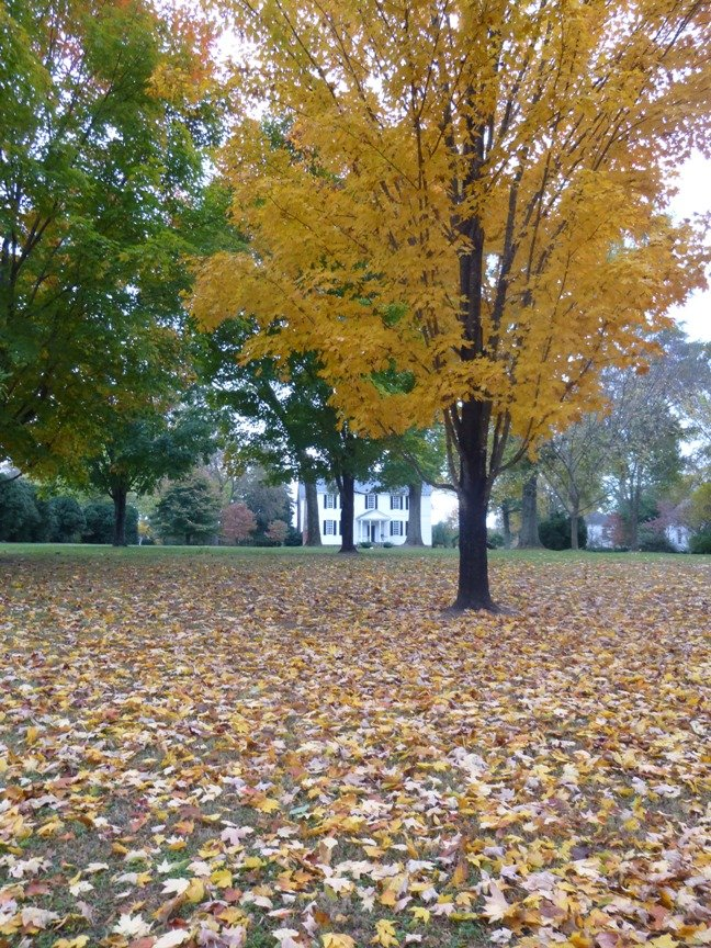 fall blog 1