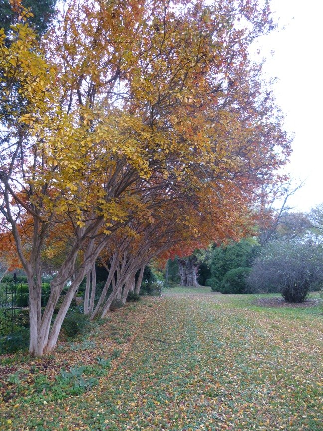 fall blog 4
