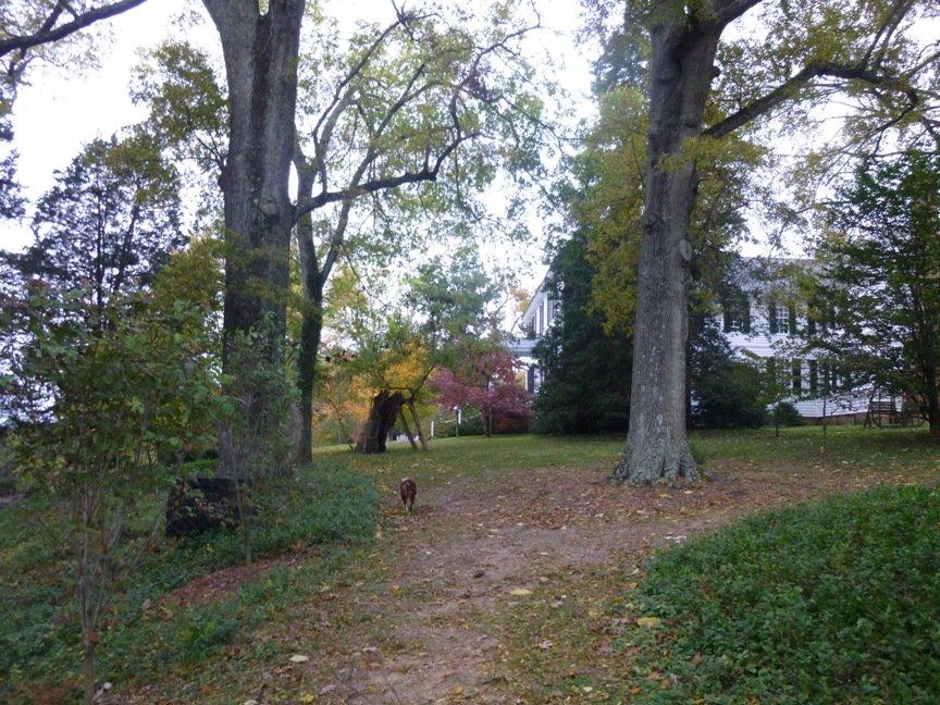 fall blog 7