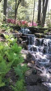 azalea-path-arboretum