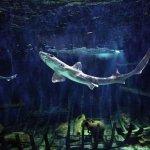 aquarium split