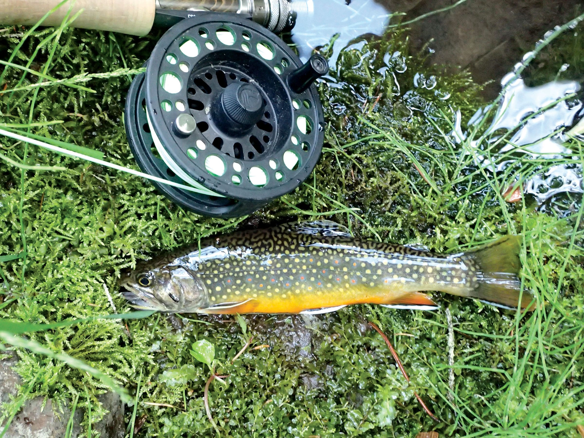 world class fishing for native brook trout