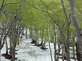 鍋倉山 《残雪期》