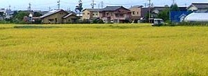 No Radiation Detected in Foodstuffs Harvested in Matsumoto and Nagano