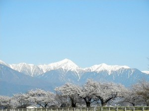 2013/04/08 am7:00 薄川堤防
