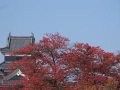 2009/10/31 松本城・街中紅葉情報