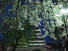4/19 松本城 夜桜会も残り1日