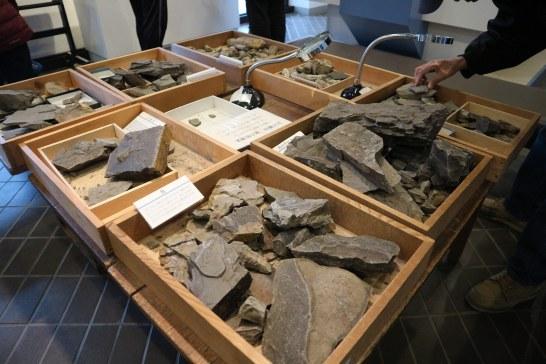 化石教室展示資料