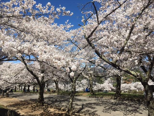 Jōyama-Park