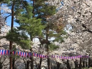 第70回松本観光桜まつり