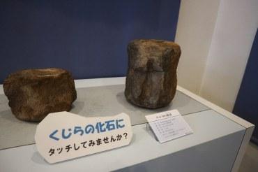 化石館クジラの化石に触る