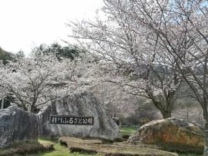 梓川ふるさと公園の桜