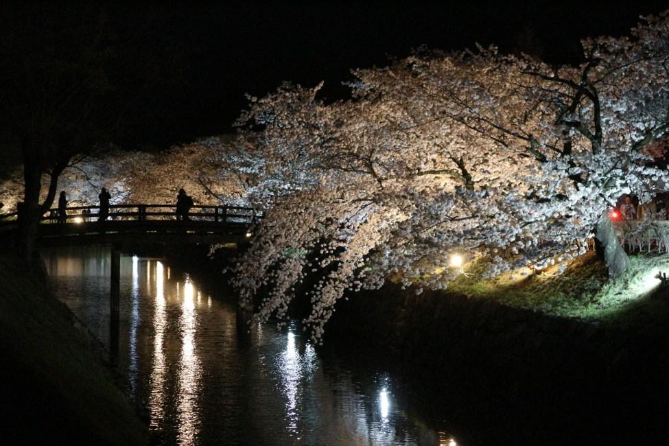 第12回 国宝松本城桜並木 光の回廊