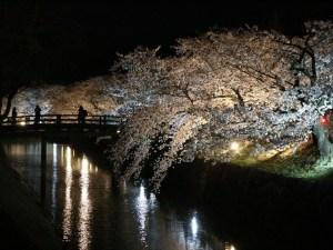 第13回 国宝松本城桜並木 光の回廊