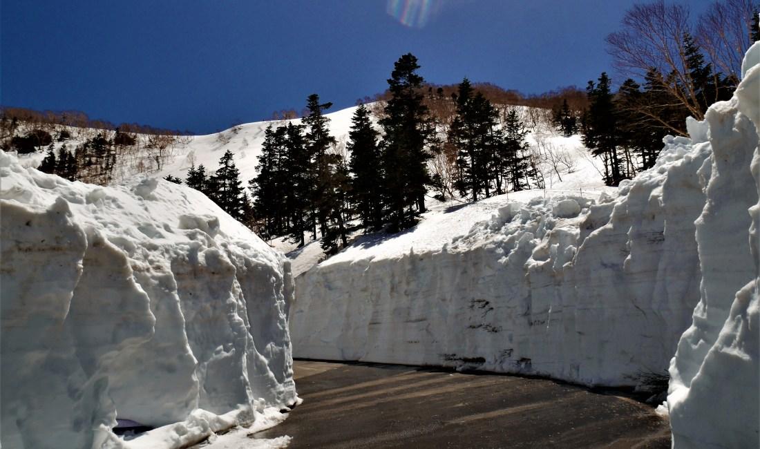 乘鞍岳的雪世界【春山巴士乘鞍雪之迴廊】