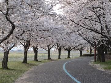 スカイパーク 花のプロムナードゾーン