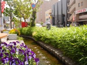 松本市2018年5月、6月活動簡介