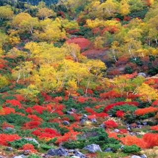 乗鞍岳(位ヶ原~三本滝)