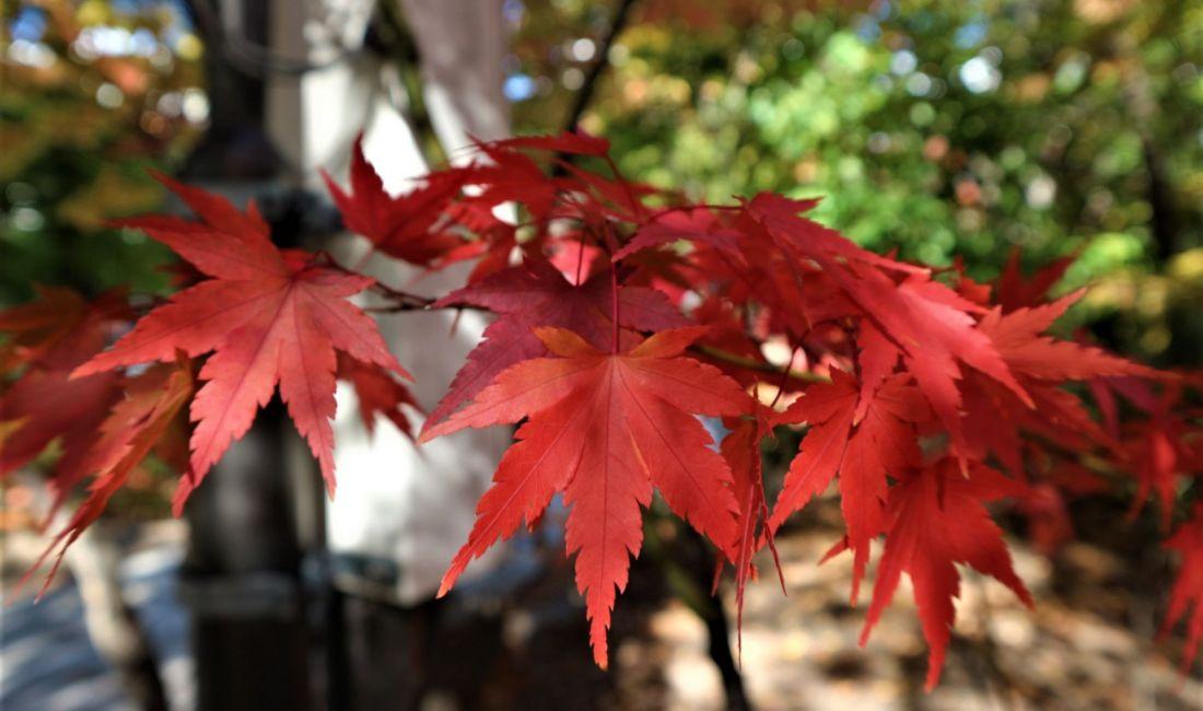 まちなか紅葉情報 四柱神社 2018/10/27