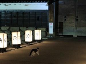 松本城暖かい2月の夜 猫もお散歩