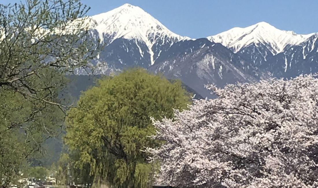 拾ヶ堰の じてんしゃひろばの桜🌸ちょっと足を延ばしてみませんか?