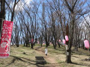 桜の開花を待つ!第27回弘法山古墳桜祭り始まる