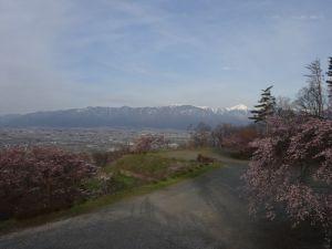 アルプス公園の桜情報