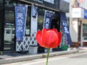新緑・花彩り鮮やかな松本の街中