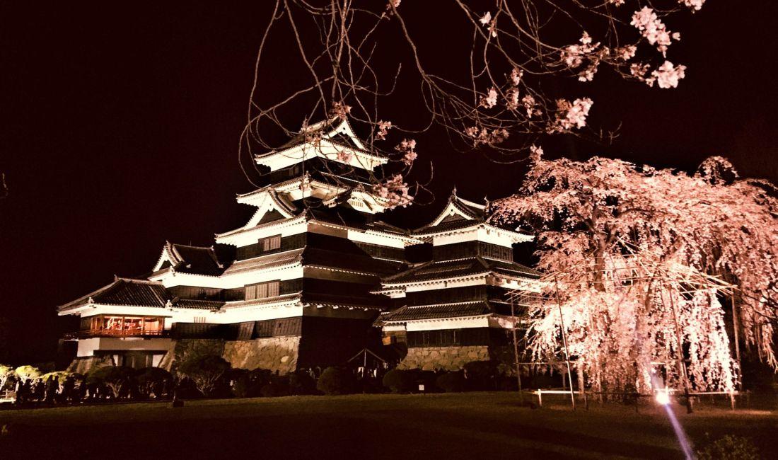 Kirschblütenfest bei Nacht an der Burg Matsumoto (夜桜)