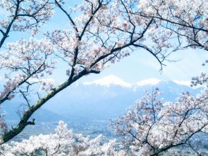 Mountains of Blossoms - Part Two: Hikarijo-yama