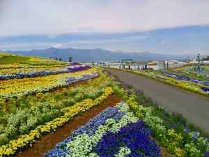 Fleurs et Nature: Découverez le Festival Shinshu Sky Park de Matsumoto