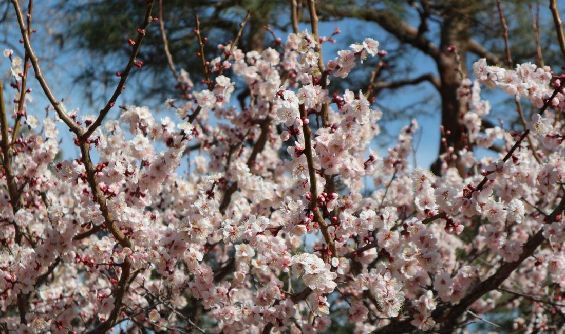美しい国宝松本城 桜の開花まではもうしばらくお待ちください。