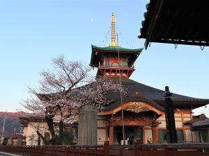 大安楽寺の桜🌸