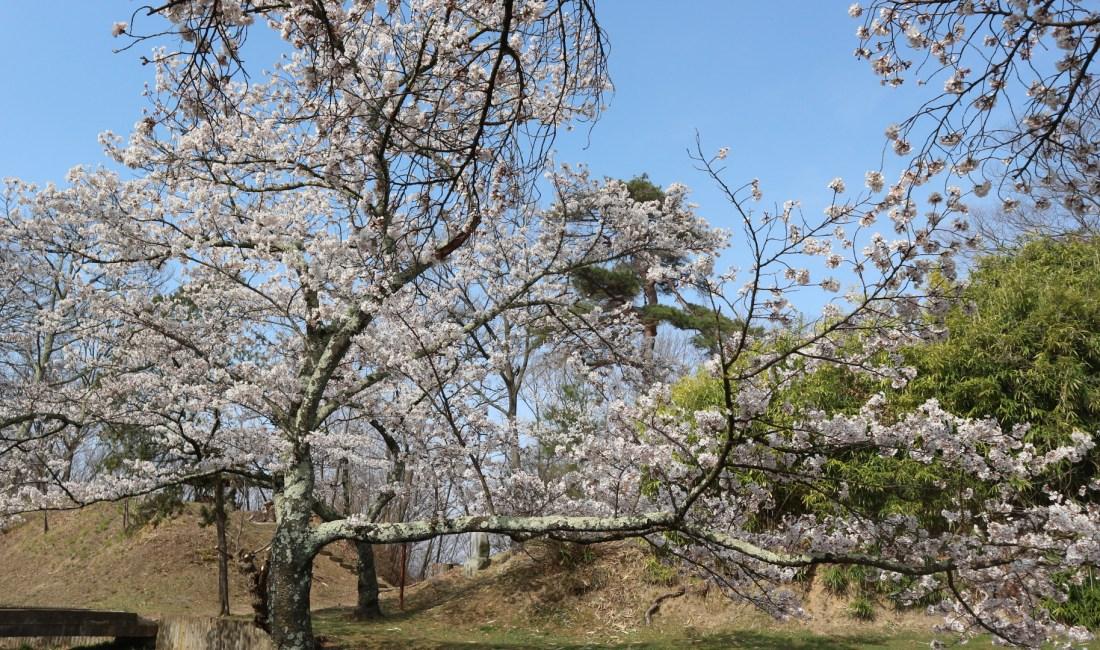 松本最古の城址公園「城山公園犬甘城跡を辿る」歴史遍#おうちで松本