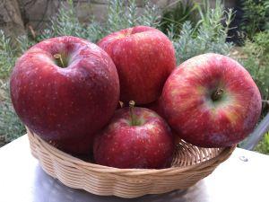 แอปเปิ้ลฤดูร้อนสายพันธ์ุใหม่ของจังหวัดนากาโน่ Shinano Lips