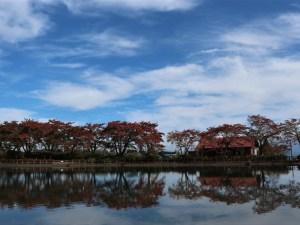 秋晴れ 梓川ふるさと公園紅葉情報