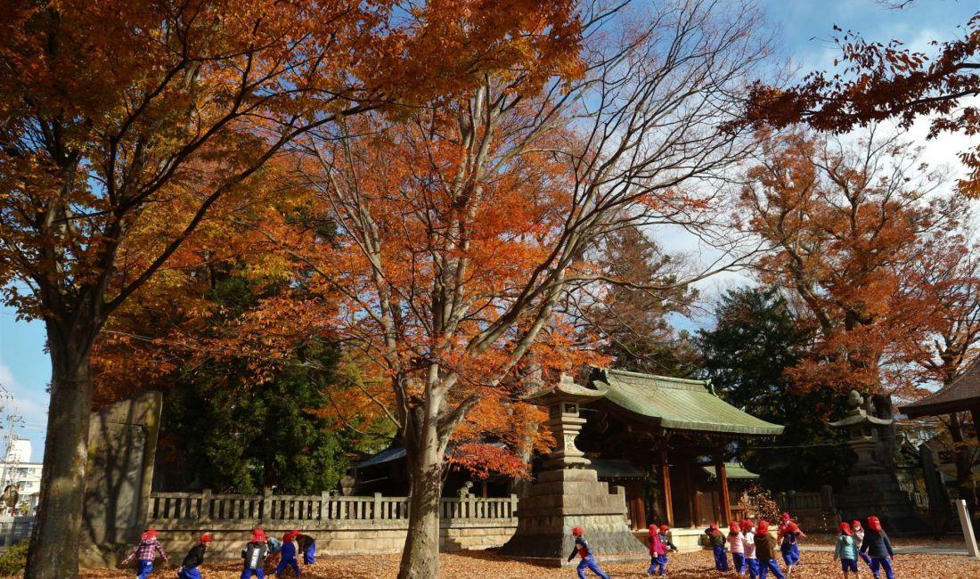 岡宮神社紅葉情報 落ち葉が楽しい!
