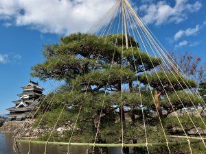 松本城も冬支度 植栽の冬囲い