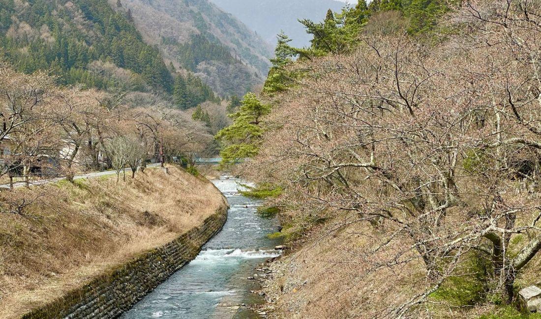 2021.3.30AM 島々谷 徳本峠入口の桜
